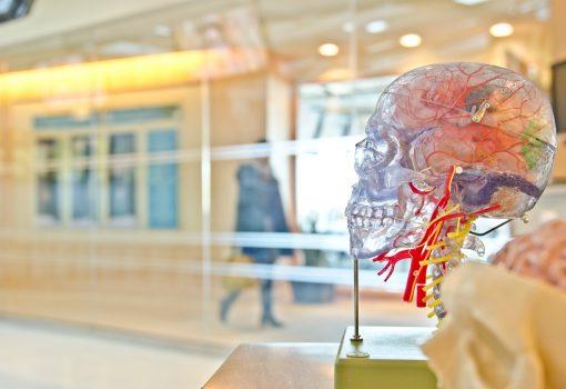 neurociência-cortez-pré-frontal